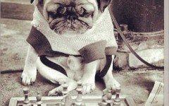 Giocare con i cani: Yoko Ono crea un'app| Dogalize