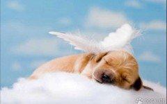El funeral para tu mascota? Si, en Mexico