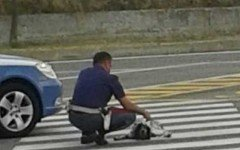 Cane abbandonato in autostrada salvato dal poliziotto
