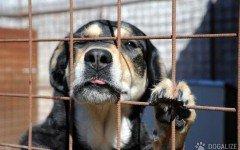 Cani rinchiusi in un lager , salvati dalla Lega Del Cane