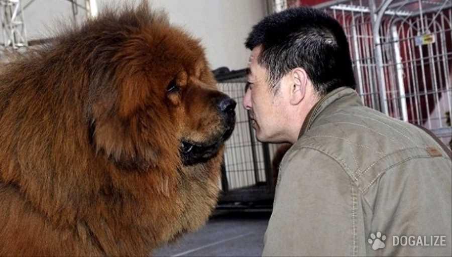 China, amenazan a matar perros registrados