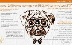 demenza senile cane demenza senile canina Cani anziani e facoltà mentali .Il declino cognitivo del cane