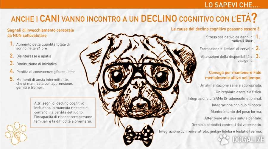 demenza senile canina Cani anziani e facoltà mentali .Il declino cognitivo del cane