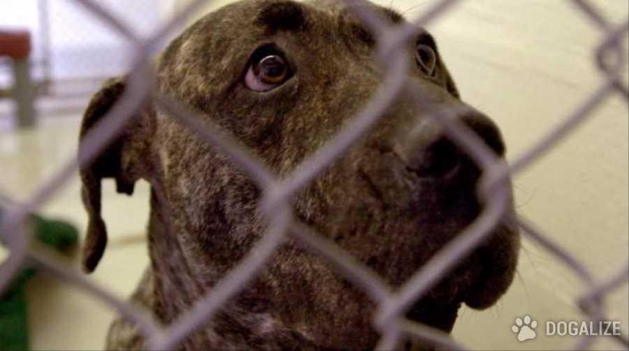 Scoperto allevamento degli orrori: cani e maiali in pessime condizioni igenico sanitario,Gli animali sono tutti stati allontanati.