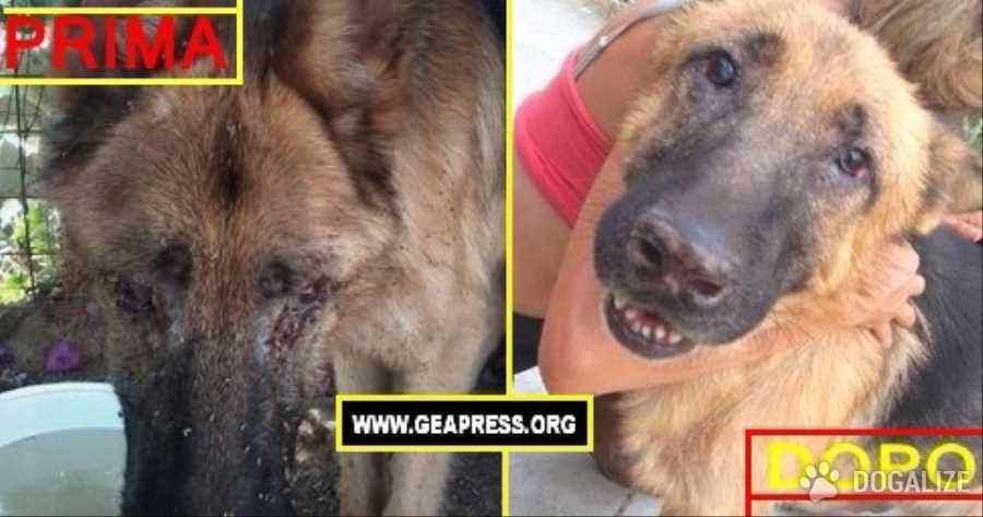 cane abbandonato foto di cani