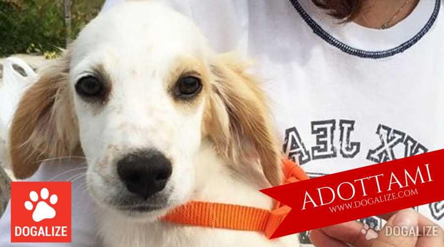 """ADOTTAMI Dogalize lancia l'iniziativa """"Adottami"""": ogni giorno un appello di adozione per aiutare i cani meno fortunati a trovare la famiglia che meritano. ALESSANDRO e GIULIO sono due tenerissimi mix setter"""
