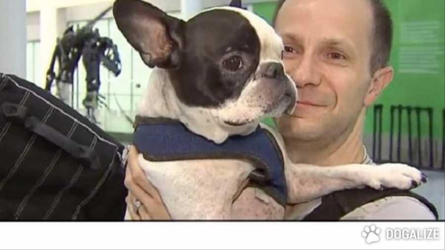 Un piloto desvia un vuelo internacional para salvar un bulldog
