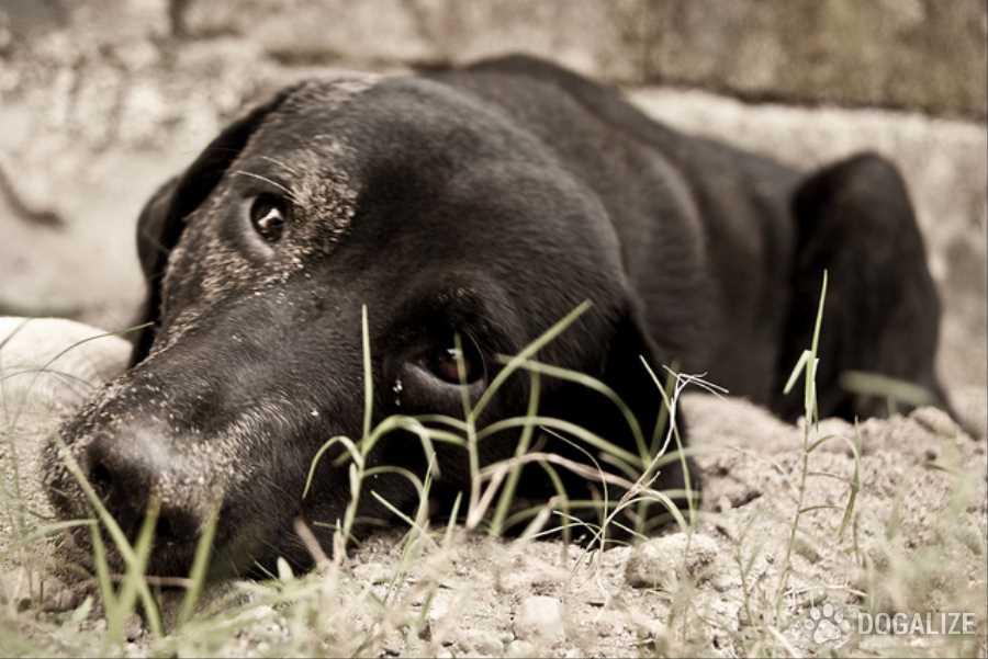 risarcimento Animali abbandonati investiti: è il gestore a risarcire i danni