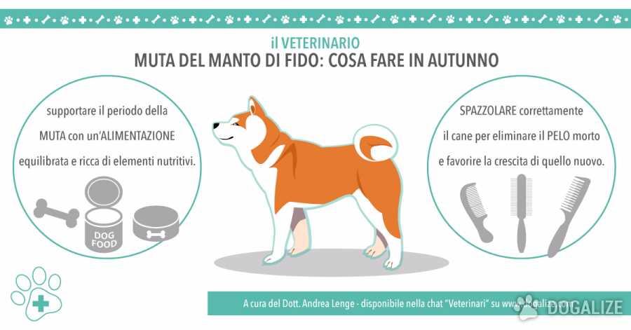 Il Pelo del cane: Pelo lucido, i consigli del Veterinario | Dogalize