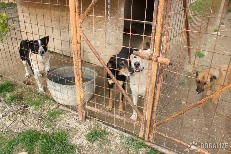Cani sopravvissuti al canile lager torneranno per strada| Dogalize