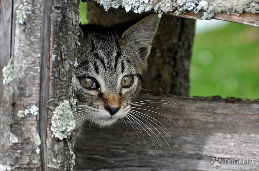 Gatti avvelenati per vendetta dal vicino!
