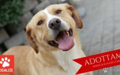 Lega Nazionale per La Difesa Del Cane: Adottami: Tom cerca una famiglia
