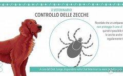 controllo delle zecche - veterinario online - passeggiata