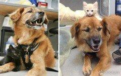 Il Cane è il cat sitter di mici senza famiglia