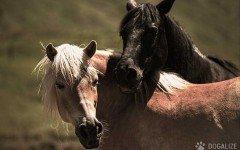 Cavalli abbandonati fra siringhe e teschi: si cerca il colpevole