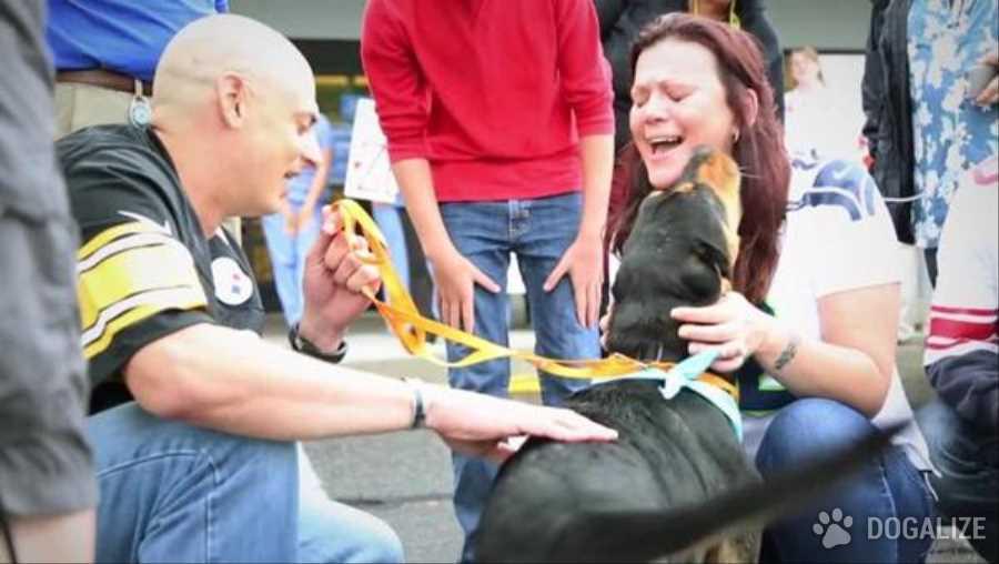 Cane ritrovato dopo 3 anni. La famiglia lo credeva morto