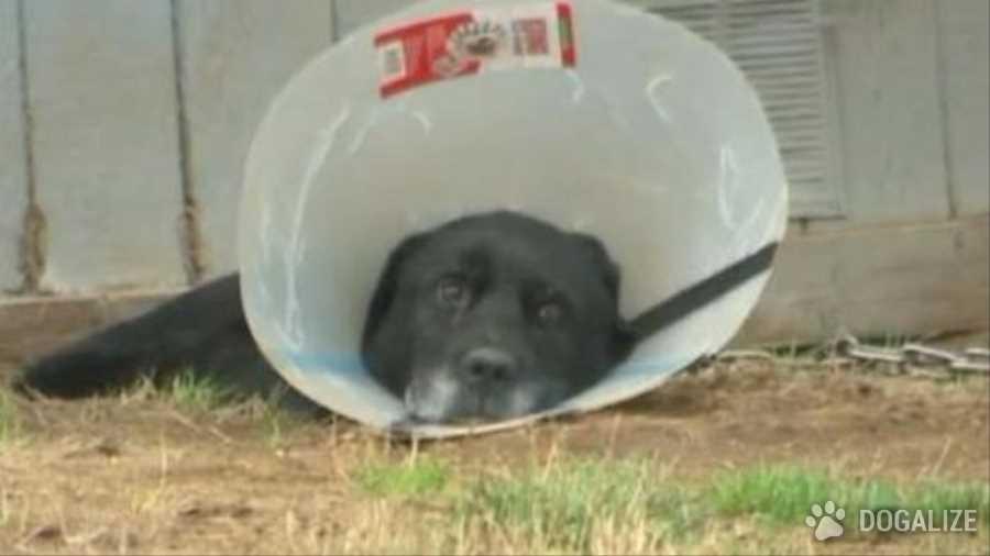 Cane in catena da 5 anni: vicini creano una petizione| Dogalize