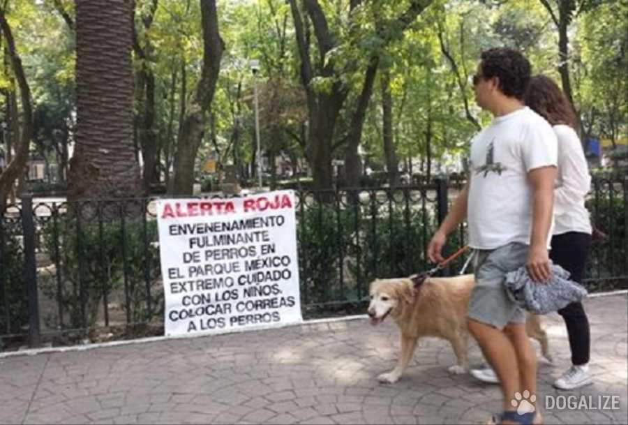 Mexico, envenenan mascotas en La Condesa