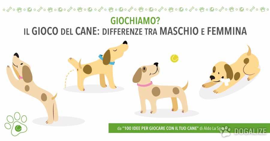 Il gioco del cane: differenze tra maschio e femmina