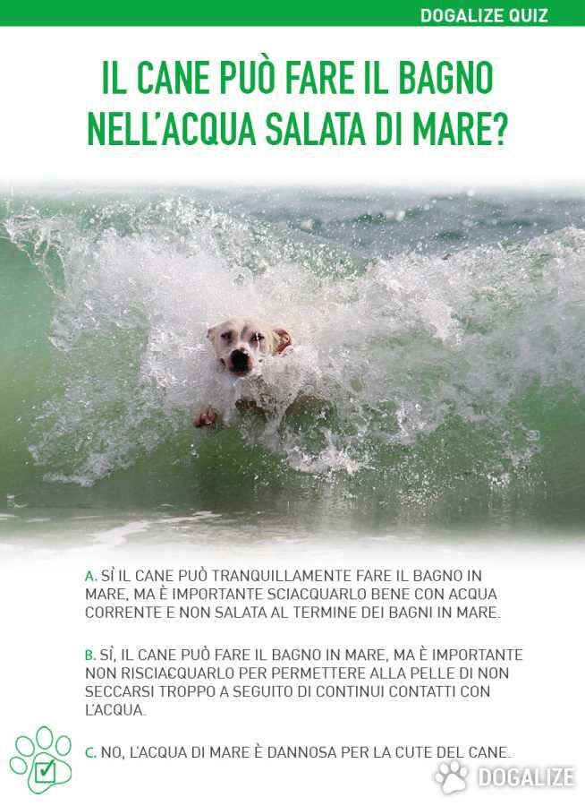 Il cane pu fare il bagno nell acqua salata di mare - Giochi di fare il bagno ...
