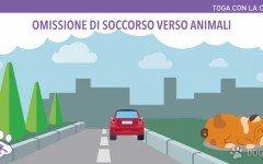 Omissione di soccorso animali: la parola dell'Avvocato
