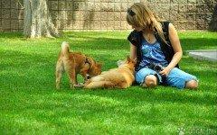 Cani e umani sincronizzati: lo dice uno studio