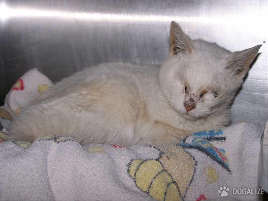 Orrore a Campo Bisenzio (FI): gatti dati in adozione ritrovati ustionati, pare che la donna che li aveva in affido li sottoponesse a sevizie.