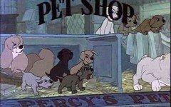 i negozi non venderanno più animali