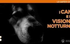 Sai come vede il cane di notte? | Dogalize