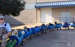 Cani randagi, in treno per favorire le adozioni | Dogalize