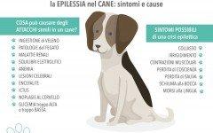 epilessia canina epilessia nel cane