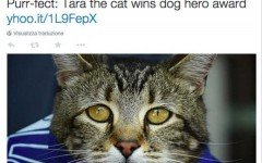 """Il premio per il cane più coraggioso dell'anno va a… un gatto! E' successo al concorso """"Hero Dog Award""""  2015, la vincitrice è una micia"""