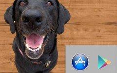 Adozioni e Cani smarriti: Le nuove sezioni di Dogalize