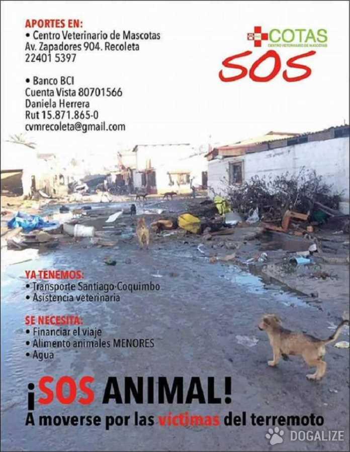 Terremoto en Chile: las mascotas tambien te necesitan!