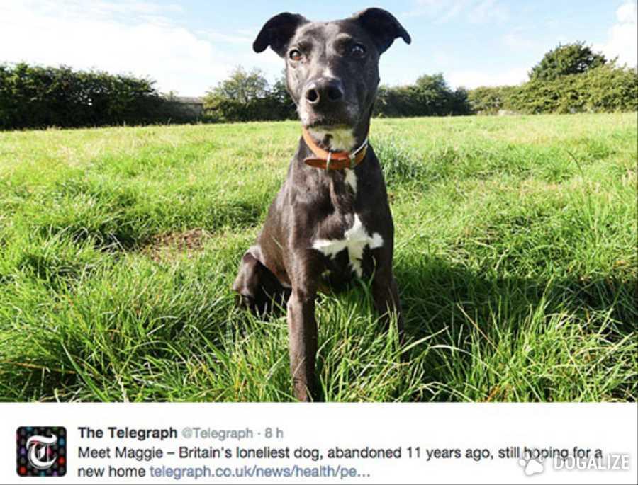 Era cucciola Maggie quando finì in canile. E da allora non è più uscita. Da ben 11 anni cercava una famiglia che le volesse bene