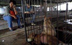 È avvenuto ieri, purtroppo, in Cina il Festival di Yulin, in cui sono stati macellati tantissimi cani per la loro carne.