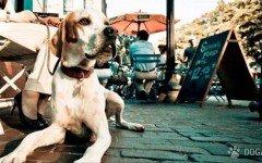 Un festival para promuover el cuidado de las mascotas