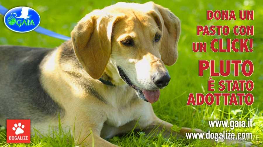 Gaia Animali: Adozioni a distanza: La tua iscrizione gratuita su Dogalize dona un pasto a un cane abbandonato ospite dei canili italiani