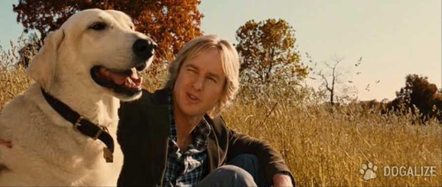 Perros famosos: peliculas con perros protagonistas
