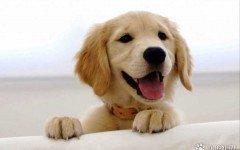 10 mitos sobre el cuidado de tu mascota