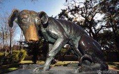 Construyeron un monumento a los perros en un rescate hispanico