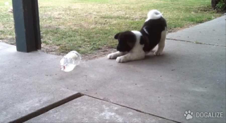 Los juguetes para perros son hechos con material reciclado