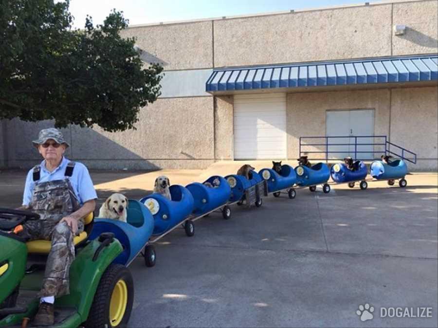 Perros callejeros paseados por un hombre en un tren casero