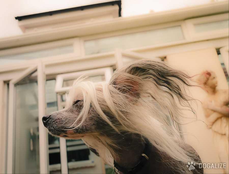 Tosare il cane: Giusto o Sbagliato ?