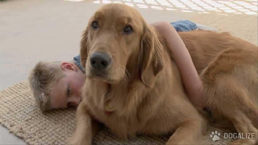 El poder sanador de las mascotas