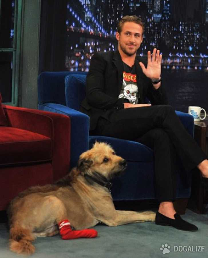 VIP: very important... perro!