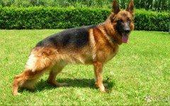 Cane legato sul balcone: Rinviato a giudizio | Dogalize