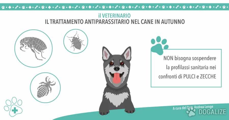 Il trattamento antiparassitario del cane in autunno | Dogalize