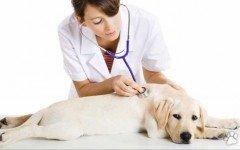 Consejos veterinarios de la semana!