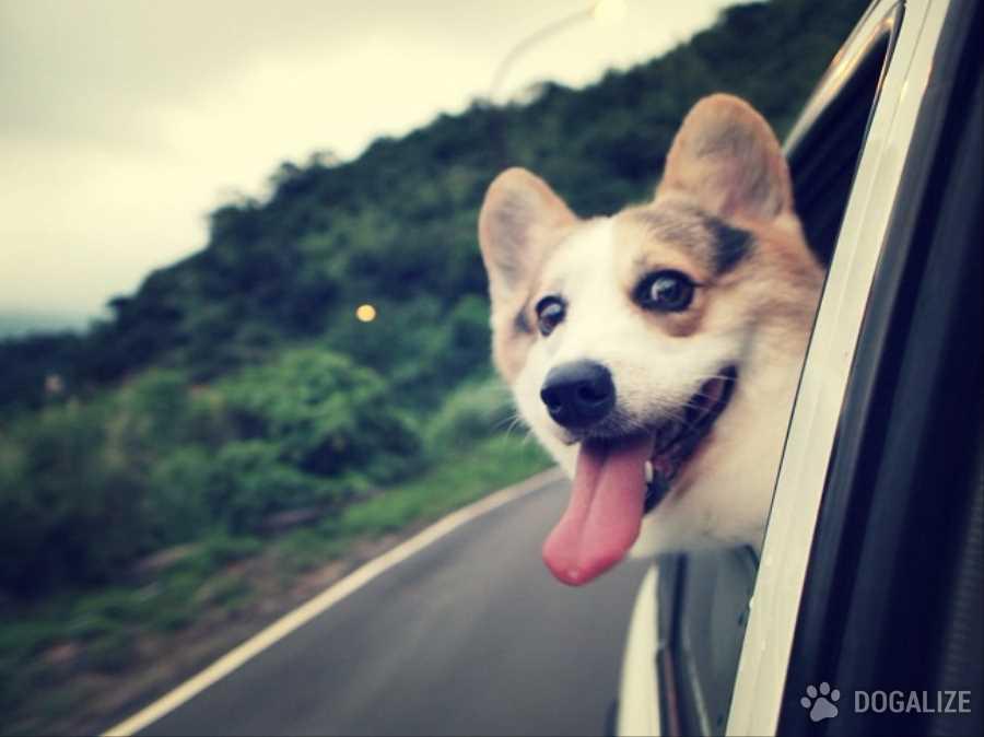 Tu cachorro se siente bien en el carro? Unos consejos!